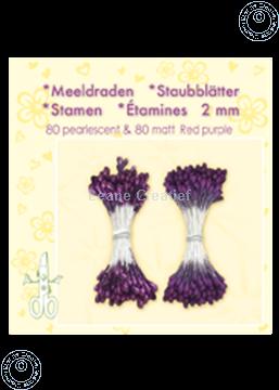 Image de Étamines ± 80 matt & 80 red purple